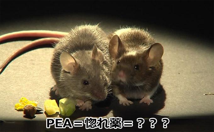 PEA注射されたマウスのカップル