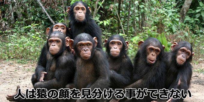 人は猿の顔を見分ける事ができない